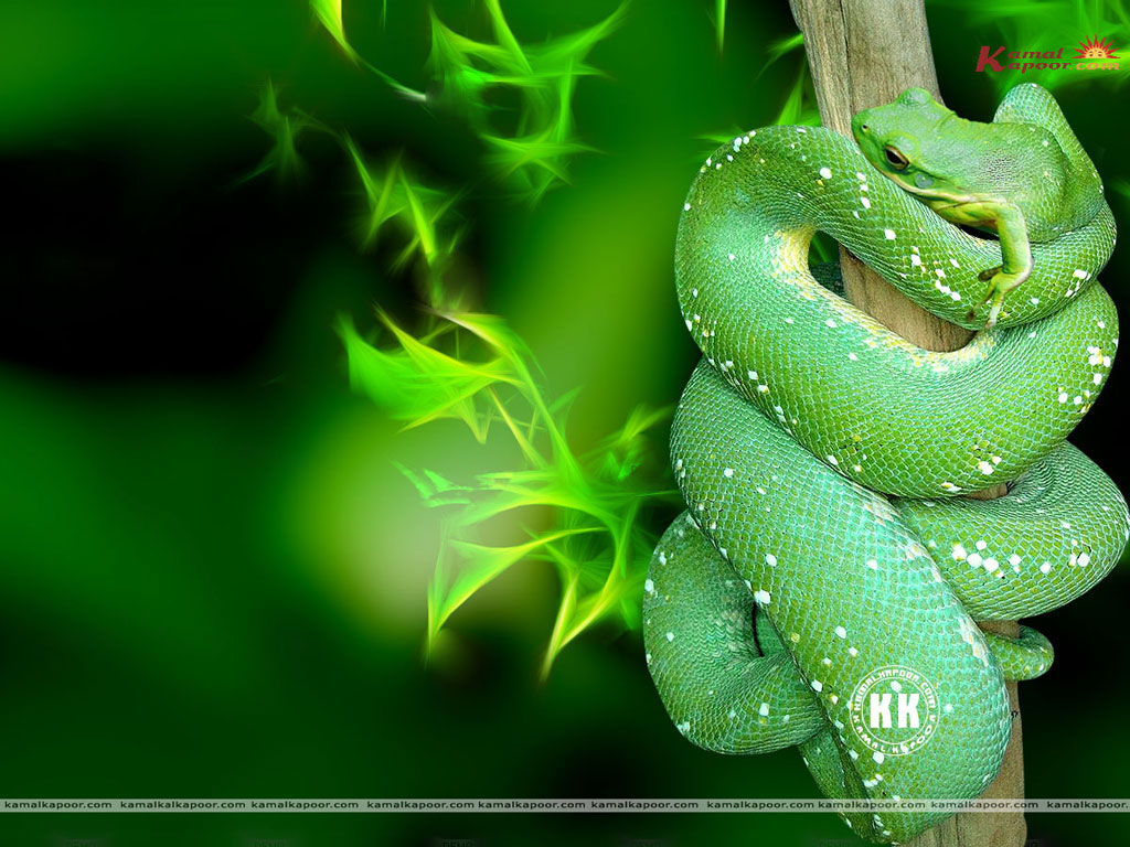 green color wallpapers for mobile dark green color