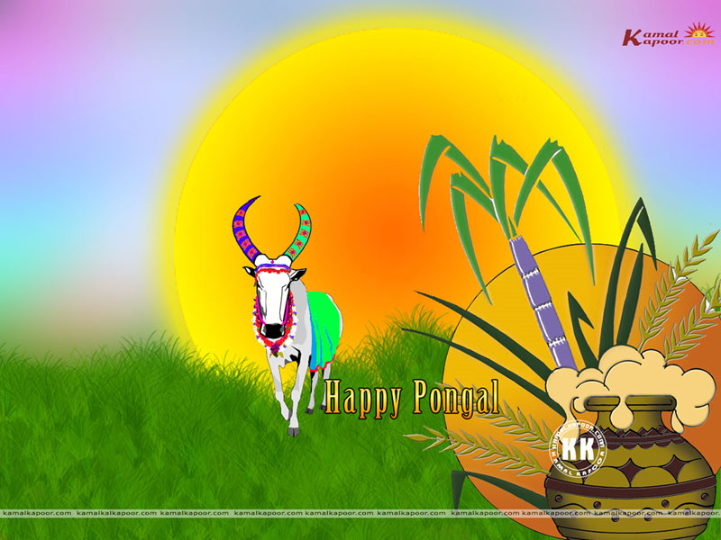Different religions full screen wallpapers of tamil festival pongal wallpaper m4hsunfo