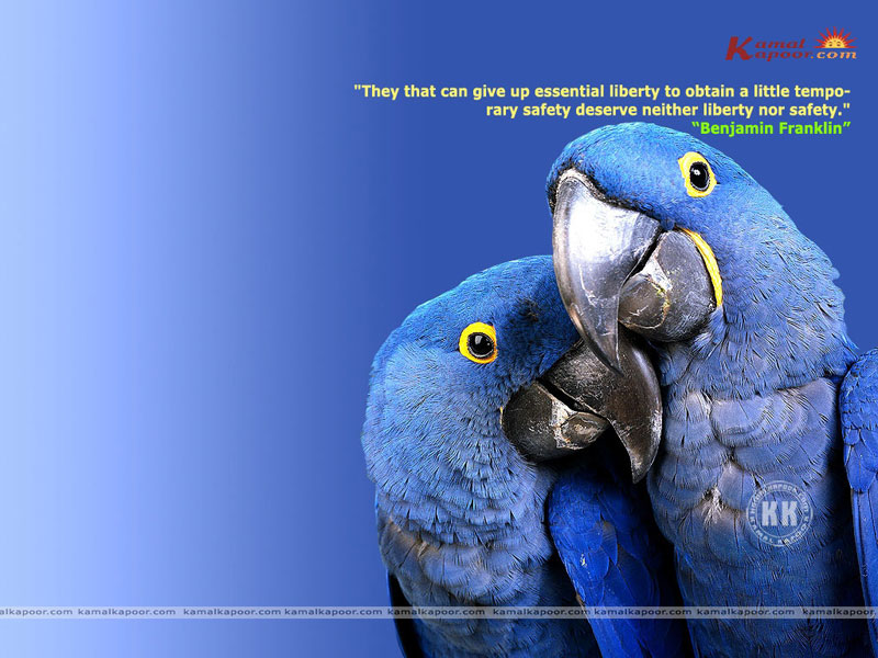 Fact-Quotation Wallpaper