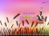 Pongal Wallpaper