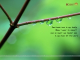 General Quotation Wallpaper